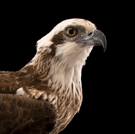 Essay on eagle bird in hindi — AFFLUENTDEVELOPING CF